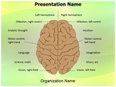 System Nervous Lateralization PowerPoint Templates