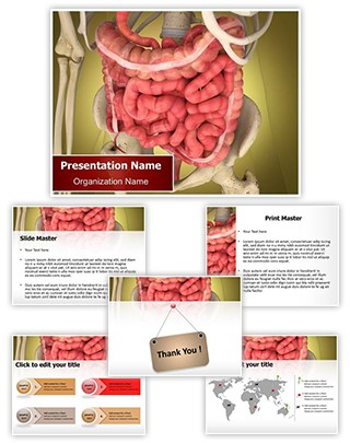 Intestinal Internal Organ Editable PowerPoint Template
