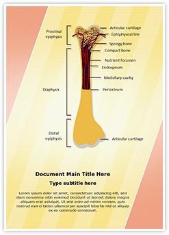Bone Structure Editable Word Template