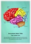 Cerebellum Brain Parts