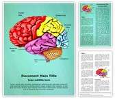 Cerebellum Brain Parts Template