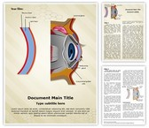 Cornea Tear Film Formation Template