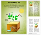 Plant Schematic Photosynthesis Template