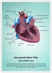 Cardiovascular Anatomy Ventricle Word Templates