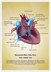 Cardiovascular Blood Pathway Word Templates