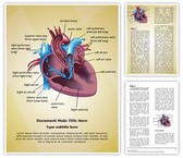 Cardiovascular Blood Pathway Editable Word Template