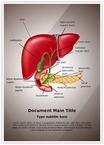 Gastrointestinal Organ System