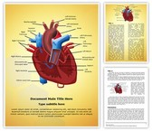 Heart Blood Circulation Template