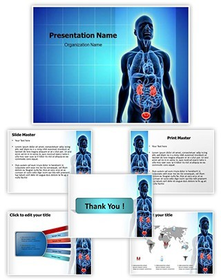 Urinary System Editable PowerPoint Template
