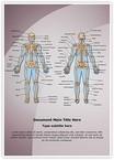 Human Bony System