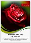 Red Rose in Dark