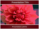Dahlia Flower Editable Free Ppt Template