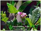 Dahlia Plant Editable Free Ppt Template