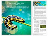 butterfly larvae Template