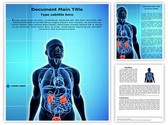 Urinary System Template